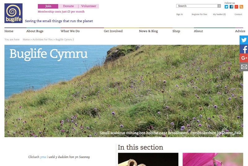 Buglife-Cymru