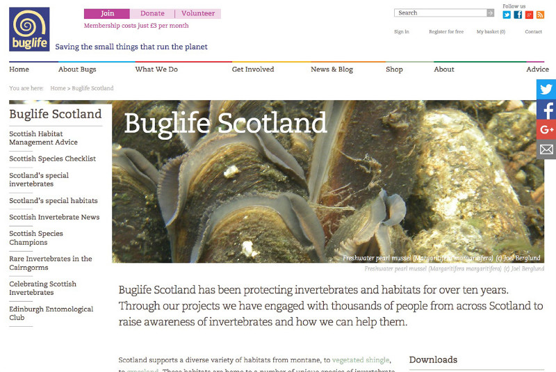 Buglife-Scotland