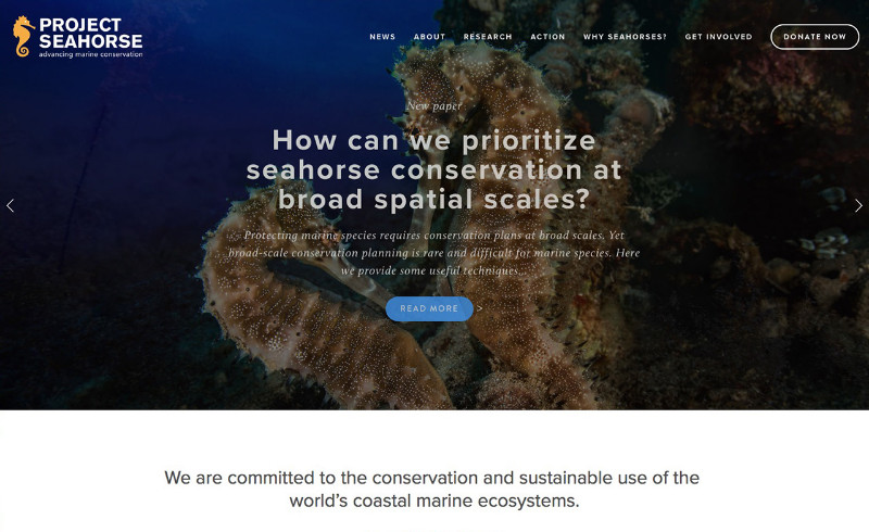 Project-Seahorse